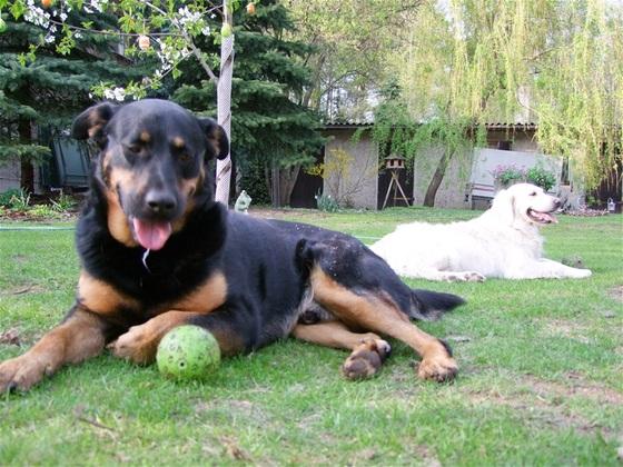 Cooper und sein Ball